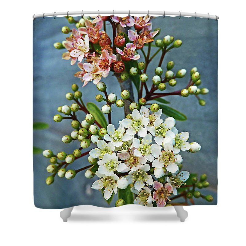 Bud Shower Curtain featuring the photograph Little Star Like Buds by Steve Taylor Photography