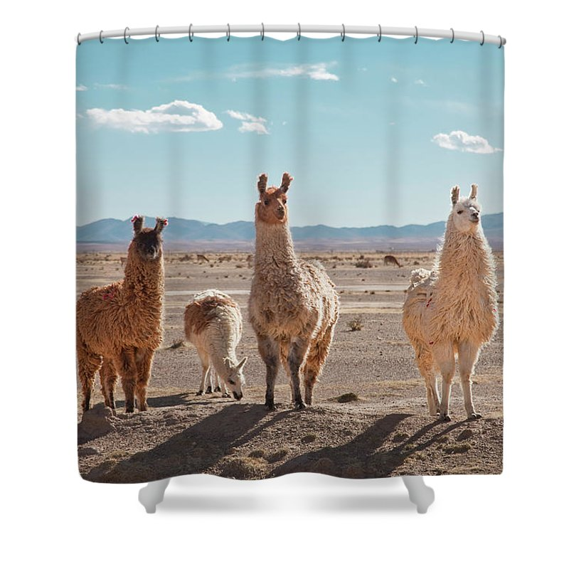 Shadow Shower Curtain featuring the photograph Llamas Posing In High Desert by Kathrin Ziegler