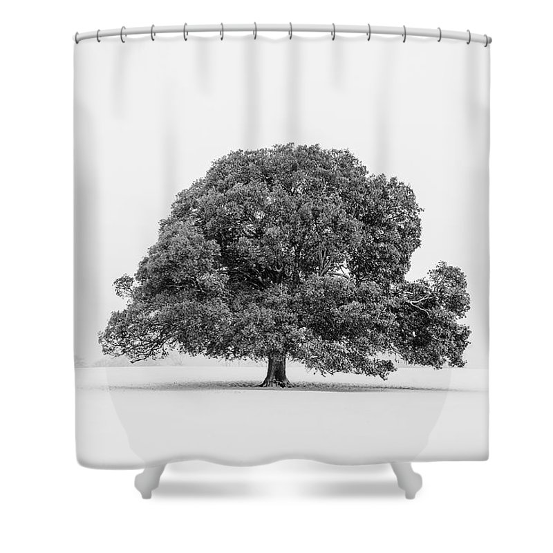 Scenics Shower Curtain featuring the photograph Lone Holm Oak Tree In Snow, Somerset, Uk by Nick Cable