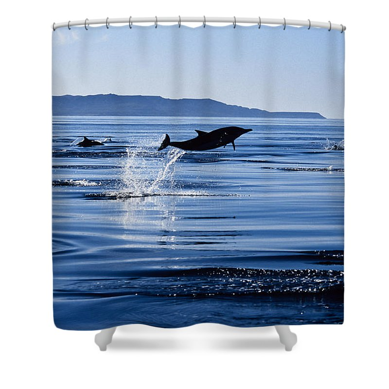 Latin America Shower Curtain featuring the photograph Long-nosed Common Dolphin,delphinus by Gerard Soury