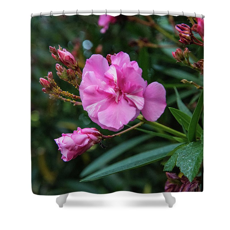 Dar Poeta Shower Curtain featuring the photograph Lost In Janiculum by Joseph Yarbrough