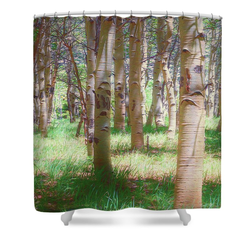 Colorado Shower Curtain featuring the photograph Lost In The Woods - Kenosha Pass, Colorado by Mike Braun