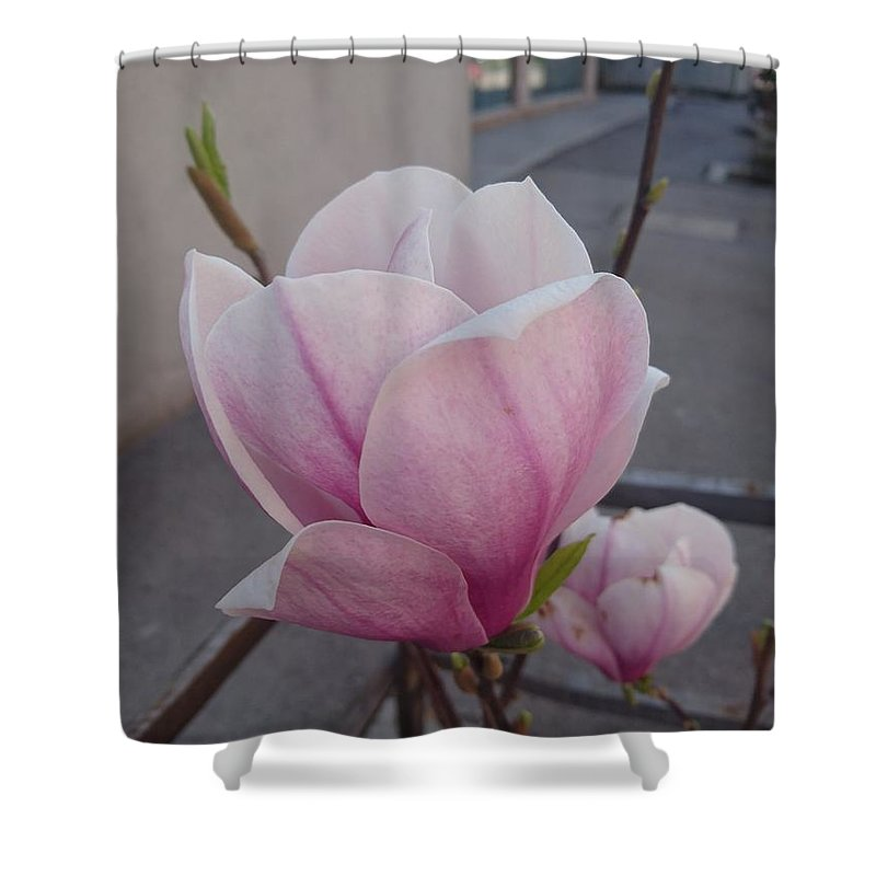 Shower Curtain featuring the photograph Magnolia by Anzhelina Georgieva