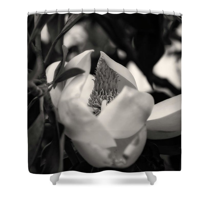 Magnolia Shower Curtain featuring the photograph Magnolia Bloom by Toni Hopper