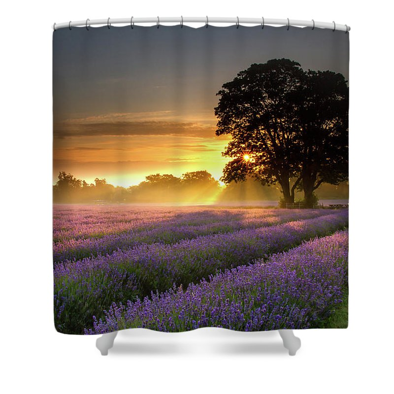 Tranquility Shower Curtain featuring the photograph Mayfair Lavender At Sunrise by Getty Images