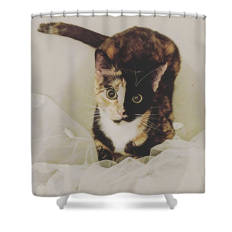 Cute Cat Shower Curtain featuring the photograph Meet Star by Star And Ray