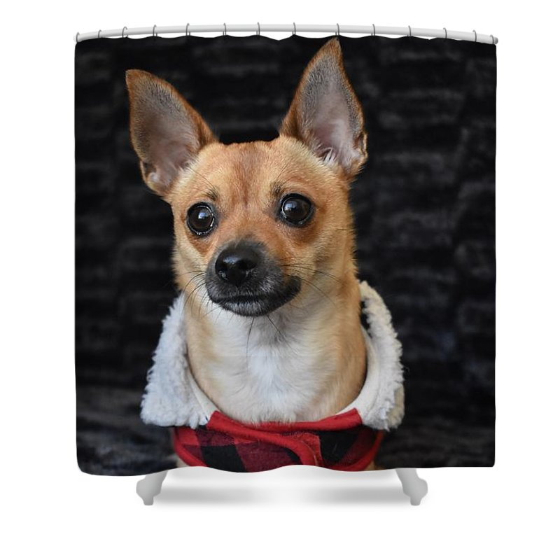 Chihuahua Shower Curtain featuring the digital art Miracle by Cassidy Marshall