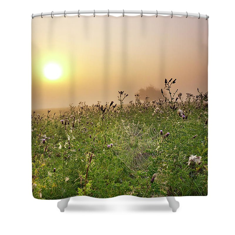 Grass Shower Curtain featuring the photograph Morning Dew On Spiders Cobweb by Travelpix Ltd