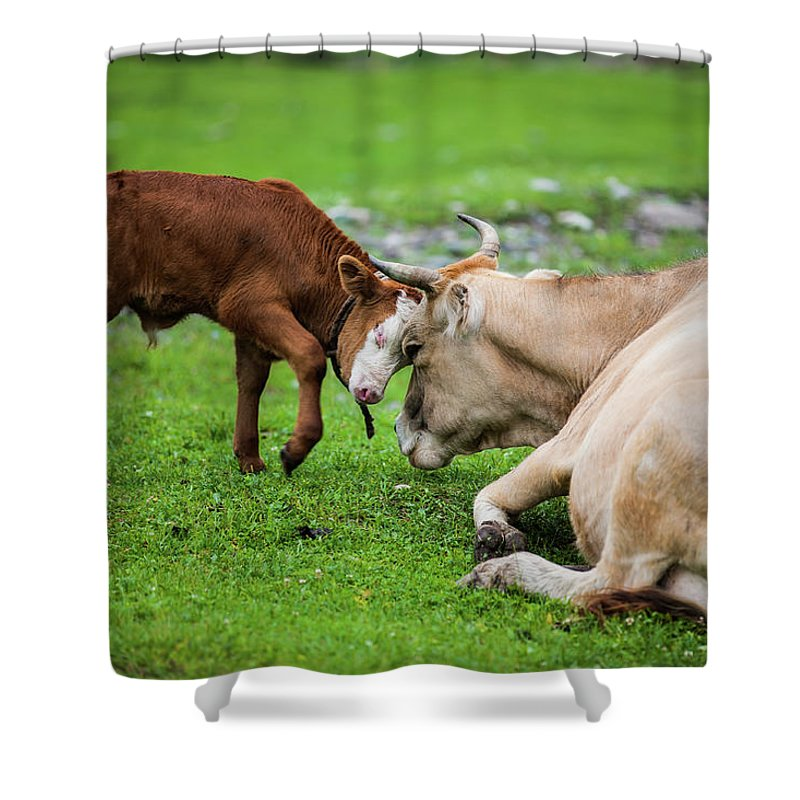 Grass Shower Curtain featuring the photograph Mother And Son by Zhouyousifang