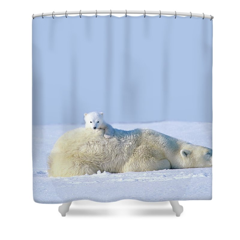 Bear Cub Shower Curtain featuring the photograph Mother Polar Bear With Cub, Lying On by Art Wolfe