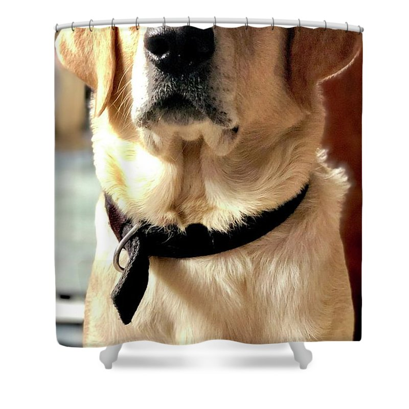 Labrador Dog Shower Curtains