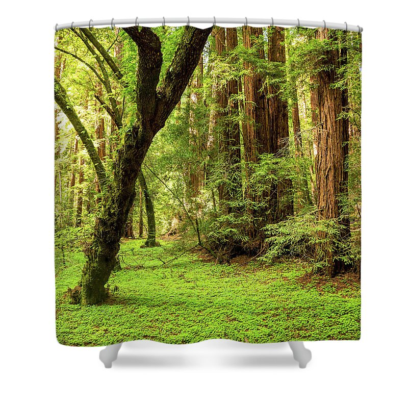 Tranquility Shower Curtain featuring the photograph Muir Woods Forest by By Ryan Fernandez