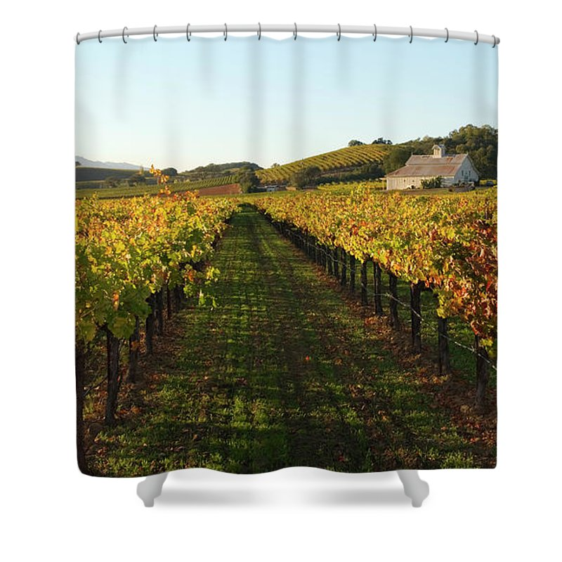 Scenics Shower Curtain featuring the photograph Napa Valley Vineyard In Autumn by Leezsnow
