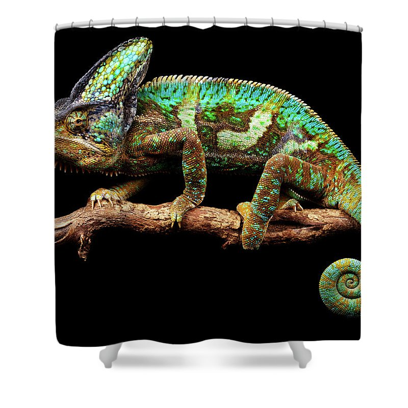 Animal Themes Shower Curtain featuring the photograph Nice And Slow by Markbridger