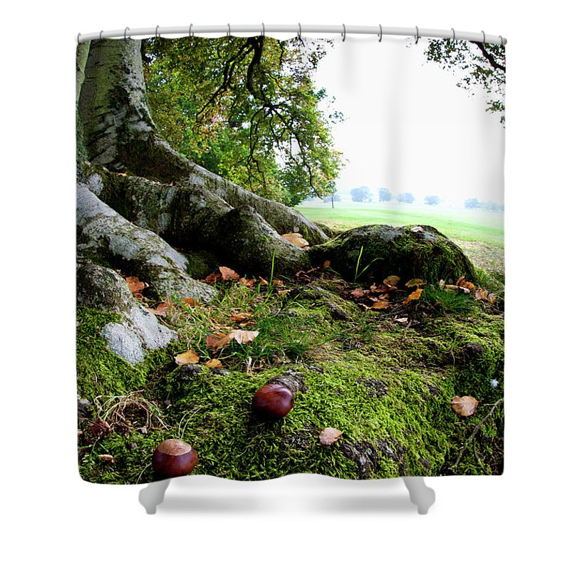 Nut Shower Curtain featuring the photograph Nuts And Fallen Leaves At The Foot Of A by John Short / Design Pics
