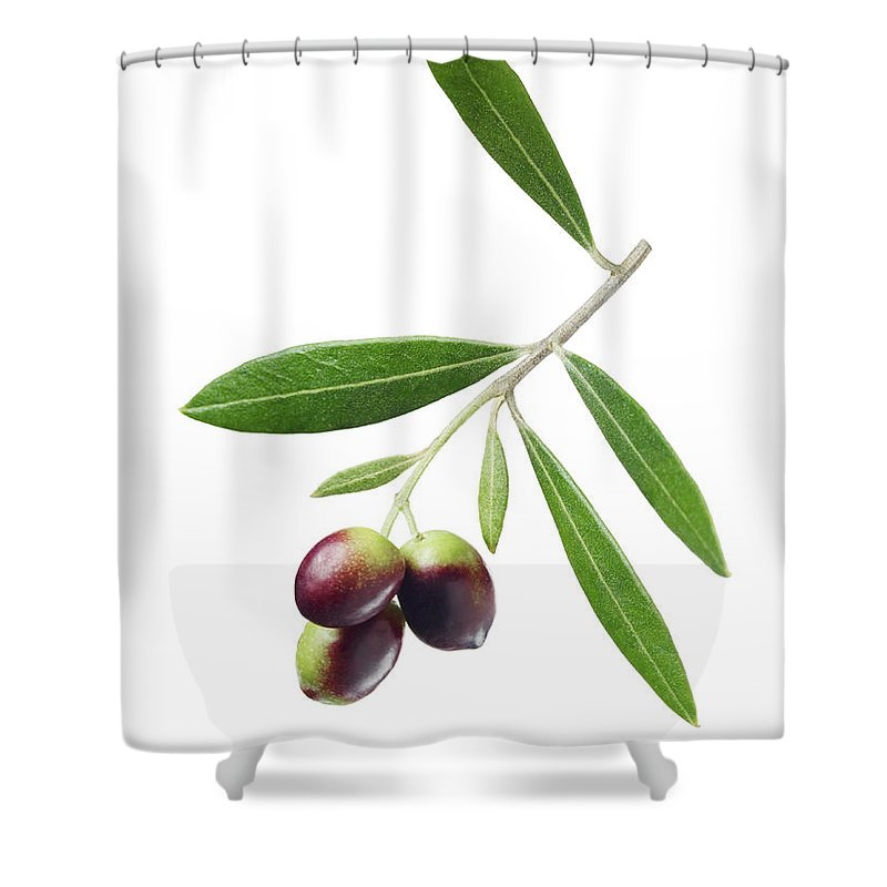 White Background Shower Curtain featuring the photograph Olives On Branch by Lauren Burke
