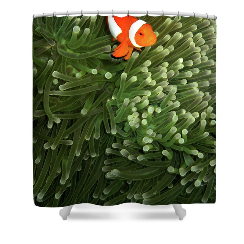 Underwater Shower Curtain featuring the photograph Orange Fish With Yellow Stripe by Perry L Aragon