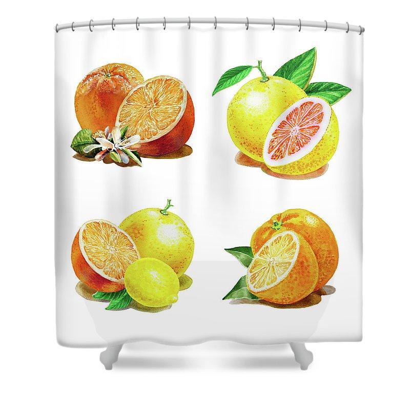 Grapefruit Shower Curtain featuring the painting Orange Grapefruit Lemon Watercolor Fruit Illustration by Irina Sztukowski