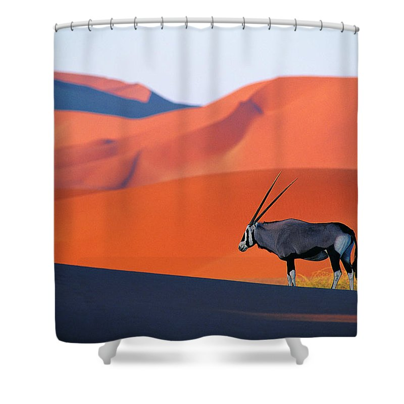 Scenics Shower Curtain featuring the photograph Oryx Antelope by Natphotos