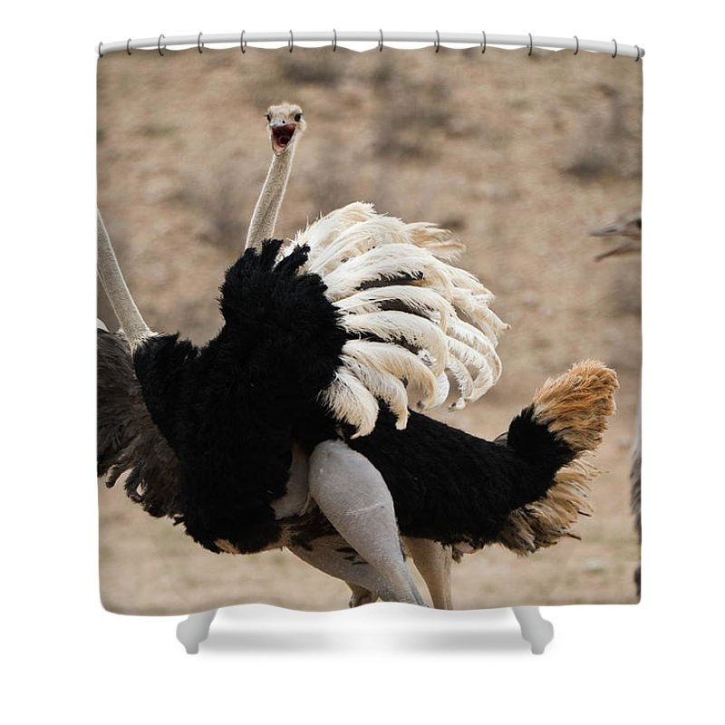Three Animals Shower Curtain featuring the photograph Ostrich Fight by Franz Aberham