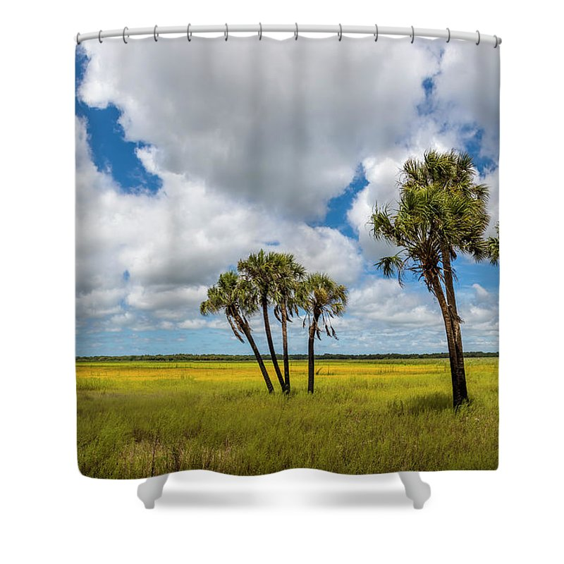 Photography Shower Curtain featuring the photograph Palm Trees In The Field Of Coreopsis by Panoramic Images