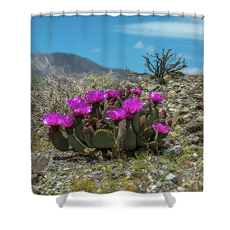 Beavertail Cactus Shower Curtain featuring the photograph Panamint Cactus by Stephen Whalen