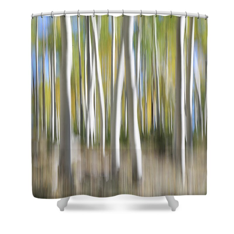 Fishlake National Forest Shower Curtain featuring the photograph Pando Abstract 5 by Donna Kennedy
