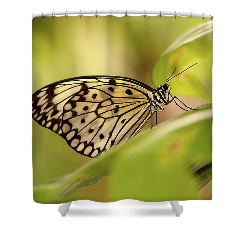 Natural Pattern Shower Curtain featuring the photograph Paper Kite Butterfly by Photos By Jay Bee