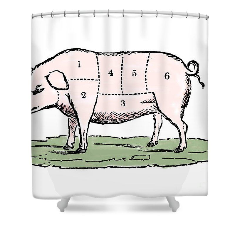 Cuts Of Pork Shower Curtain featuring the drawing Pig, Cuts Of Pork by European School
