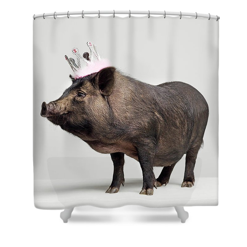 Crown Shower Curtain featuring the photograph Pig With Toy Crown On Head, Studio Shot by Roger Wright