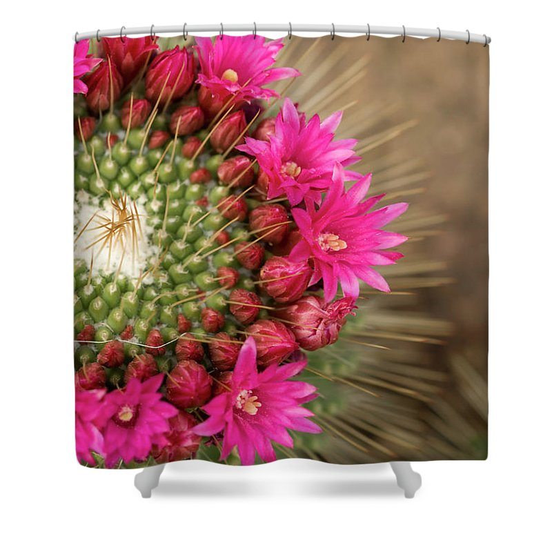 Bud Shower Curtain featuring the photograph Pink Cactus Flower In Full Bloom by Zepperwing