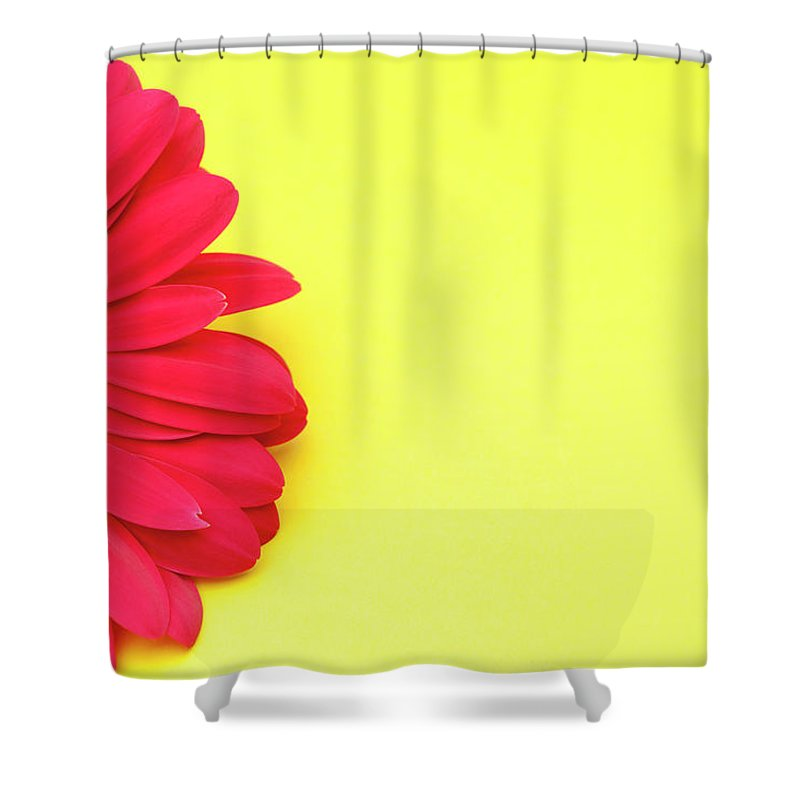 Petal Shower Curtain featuring the photograph Pink Gerbera Daisy On Yellow Background by Jill Fromer
