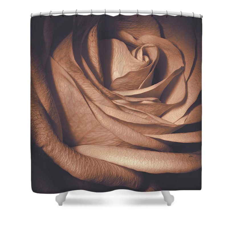 Macro Shower Curtain featuring the photograph Pink Rose Petals 0219 by Howard Roberts