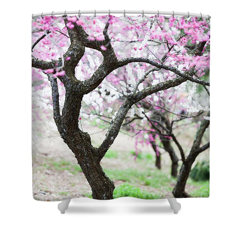 Scenics Shower Curtain featuring the photograph Plum Blossoms by Ooyoo