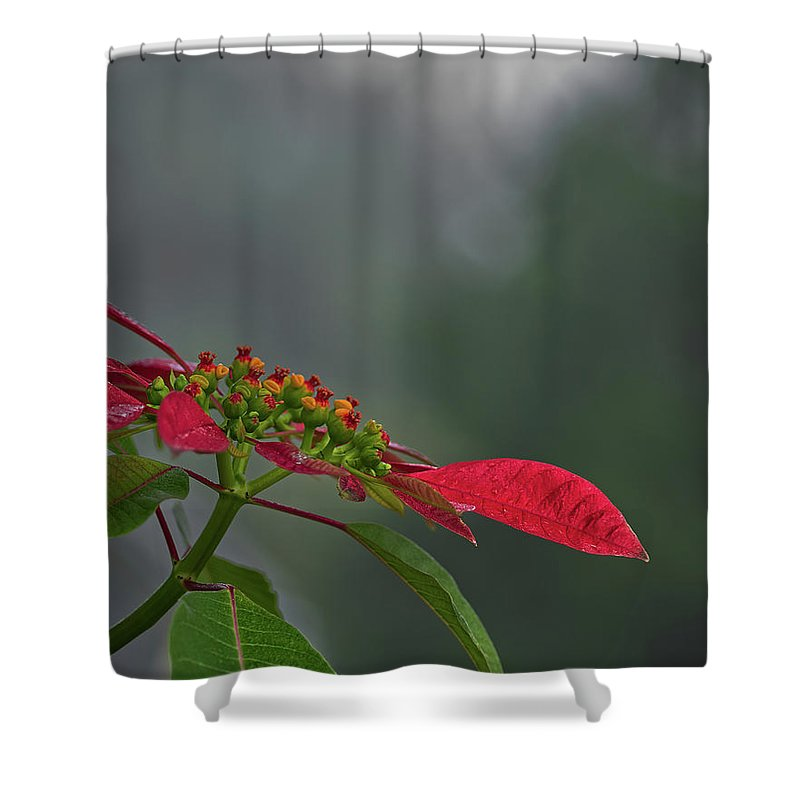 Nature Shower Curtain featuring the photograph Poinsettia by Richard Rizzo