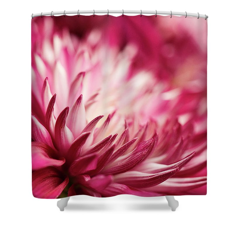 Petal Shower Curtain featuring the photograph Poised Petals by Jody Trappe Photography