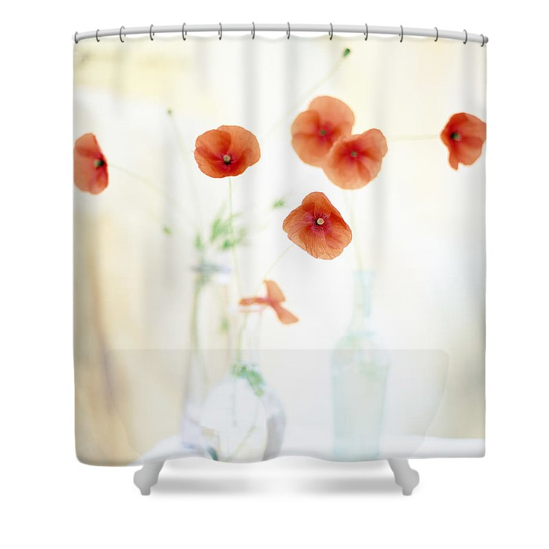 Vase Shower Curtain featuring the photograph Poppies In Vases by Victoria Pearson