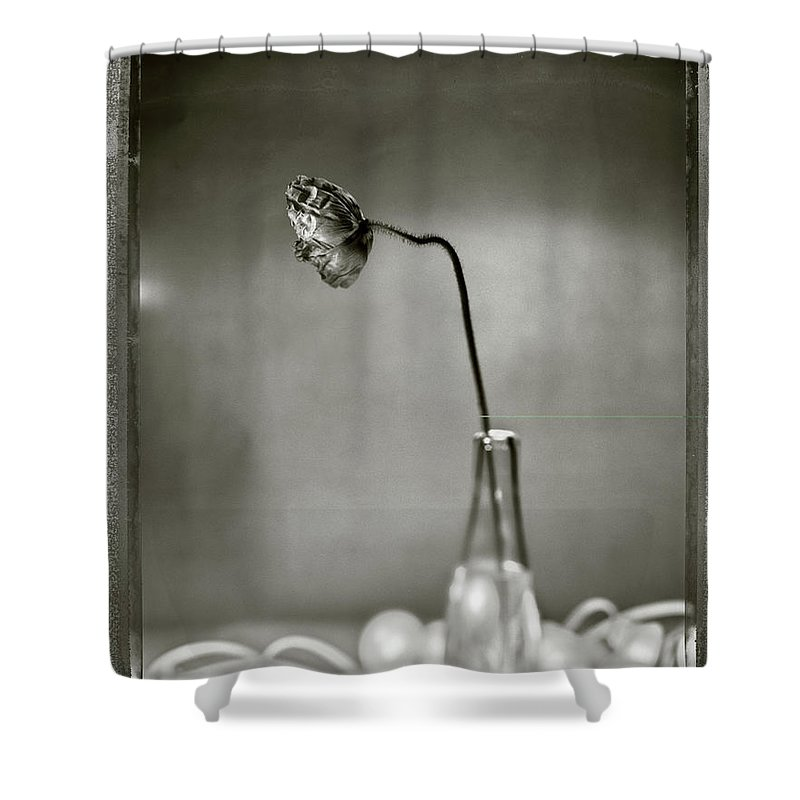 Fragility Shower Curtain featuring the photograph Poppy - Just Opened by T Scott Carlisle