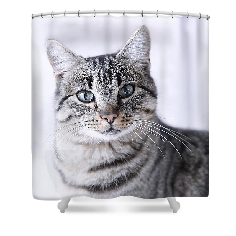Pets Shower Curtain featuring the photograph Portrait Gray Tabby Cat by Maika 777