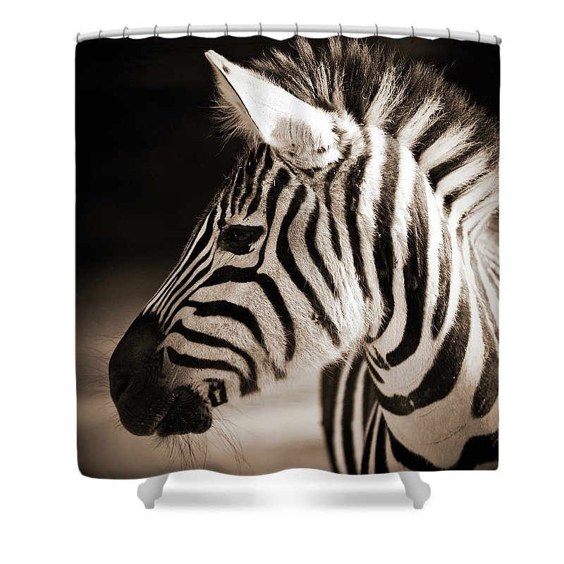 Black Color Shower Curtain featuring the photograph Portrait Of A Young Zebra by Cruphoto