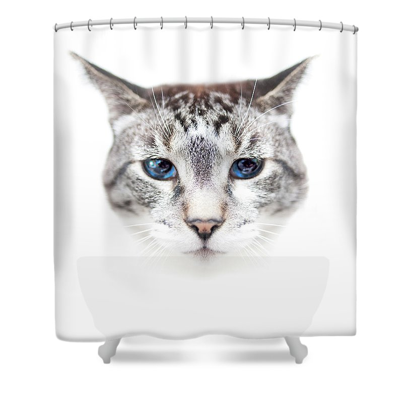 Pets Shower Curtain featuring the photograph Portrait Of Cat by By Jonathan Fife