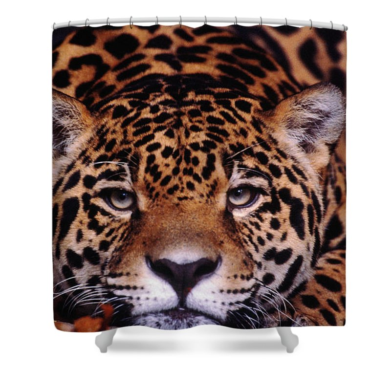 Latin America Shower Curtain featuring the photograph Portrait Of Jaguar, Brazil by Mark Newman
