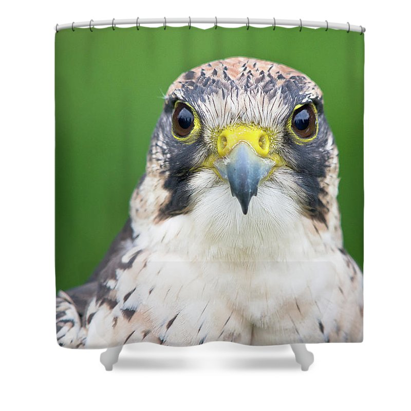 Animal Themes Shower Curtain featuring the photograph Portrait Of Peregrine Falcon by Michal Baran