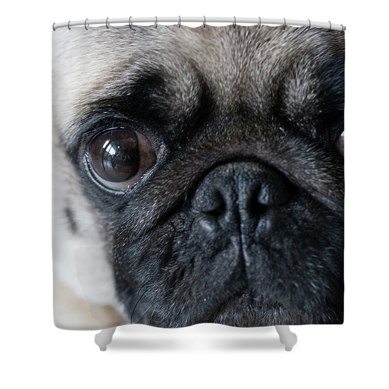 Pets Shower Curtain featuring the photograph Pud Dog by Photo By Chris Gladis