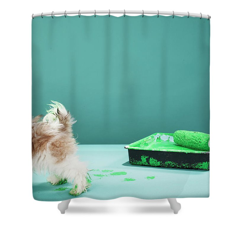 Pets Shower Curtain featuring the photograph Puppy Making Green Paw Prints From by Martin Poole