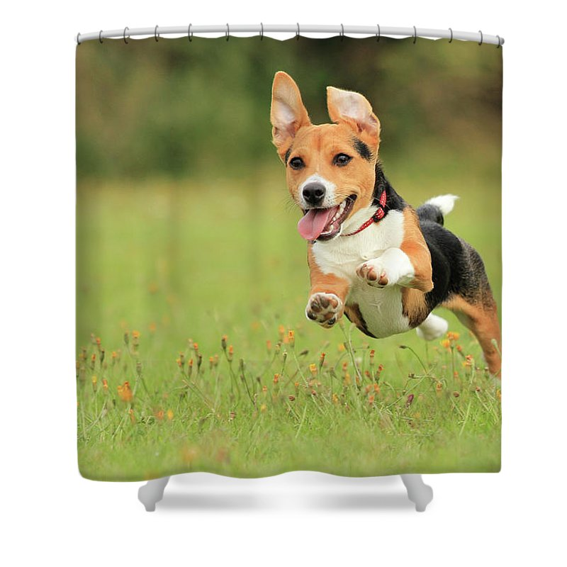 Grass Shower Curtain featuring the photograph Puppy by Paul Baggaley