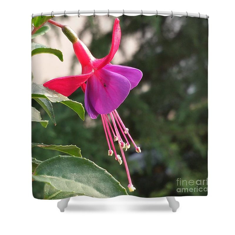 Shower Curtain featuring the photograph Purple Bell by Paola Baroni