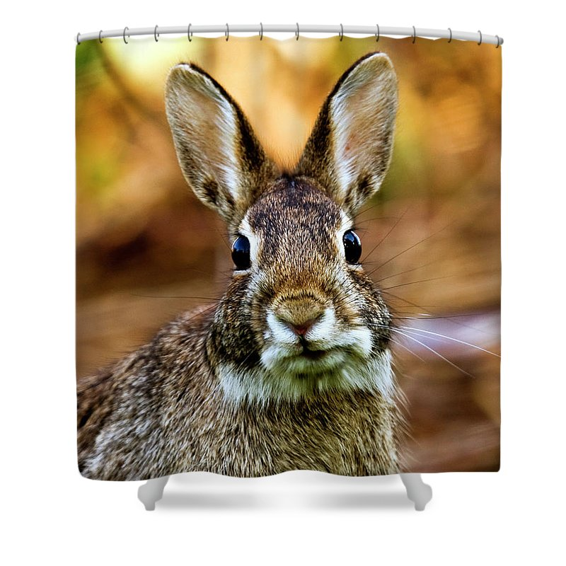 Animal Themes Shower Curtain featuring the photograph Rabbit by Hvargasimage