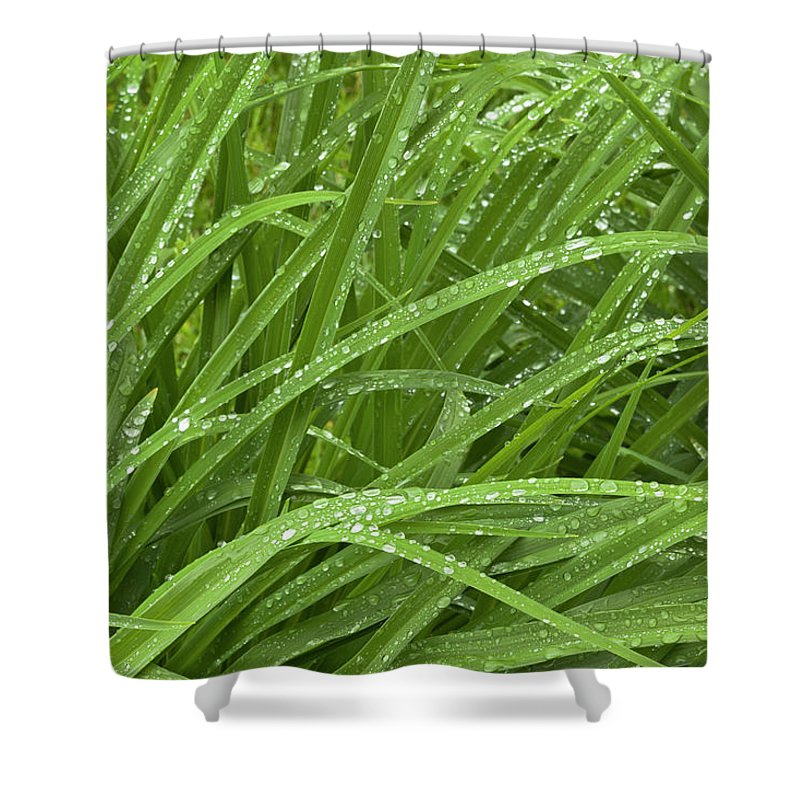 Tranquility Shower Curtain featuring the photograph Raindrops Of Daylily Foliage by Adam Jones