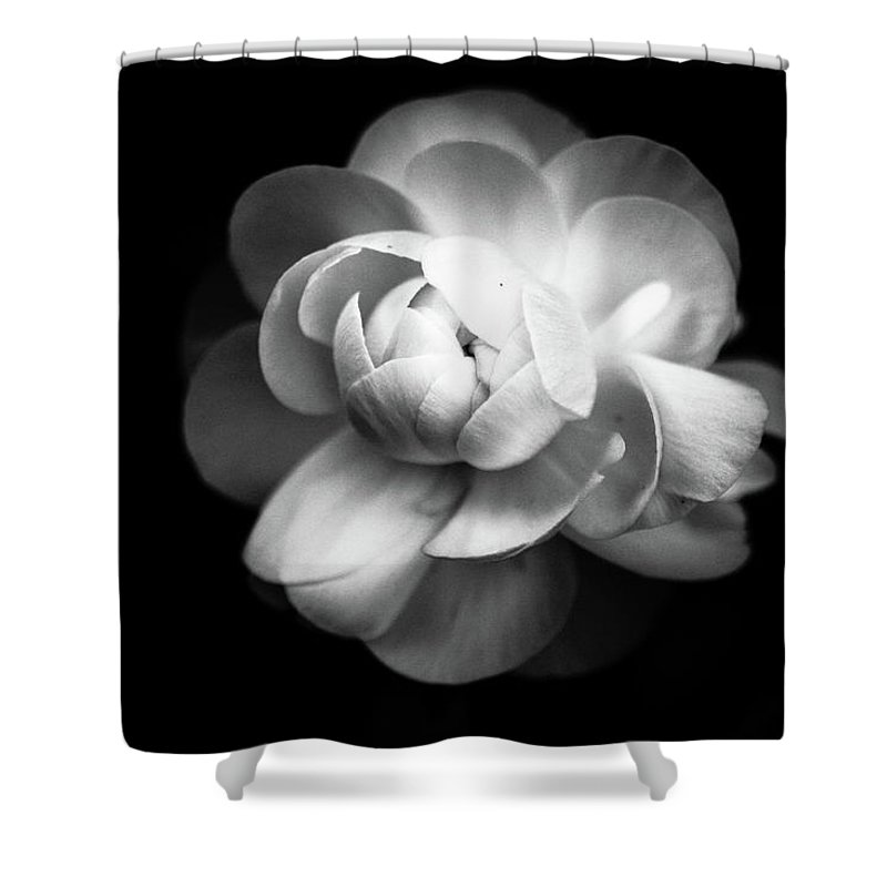 Black Background Shower Curtain featuring the photograph Ranunculus Flower by Annfrau